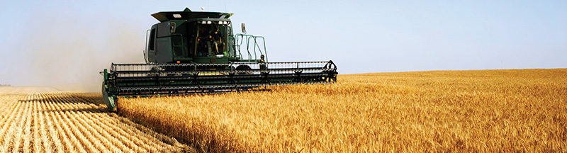 Wheat Harvest Image